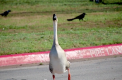 FWCD Wildlife: Birds